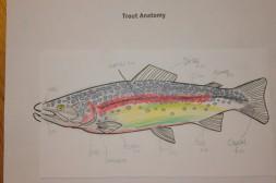 fish file 4