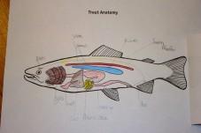 fish file 5